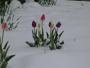 Snow-Flowers
