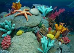 Marine-Life-sea-life-7591159-1280-909